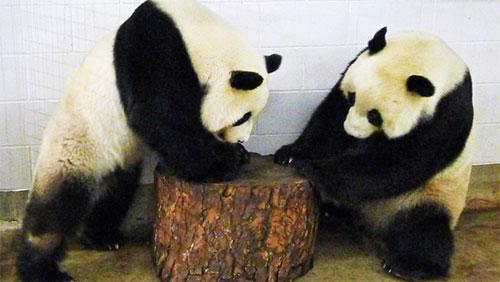 Wang Wang & Funi